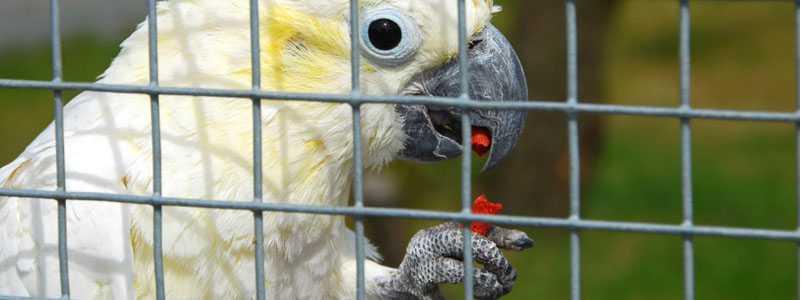 Bird mesh